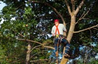Riverside Docklands tree crown reduction services
