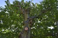 free Riverside Docklands tree crown reduction quotes